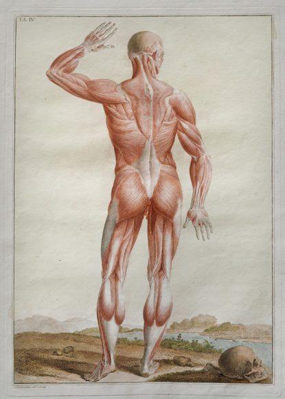 Paolo Mascagni - Anatomia per uso degli studiosi di scultura e  pittura - Riproduzione riservata