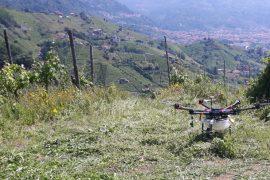 Trattamento con antiparassitari con drone - Riproduzione riservata