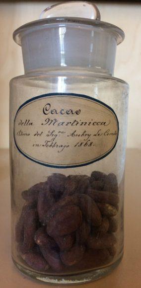Semi di cacao provenienti dalla Martinica (da Botanica per Mostra Il cacao tra gusto dell'esotico e bevanda dell'animo)