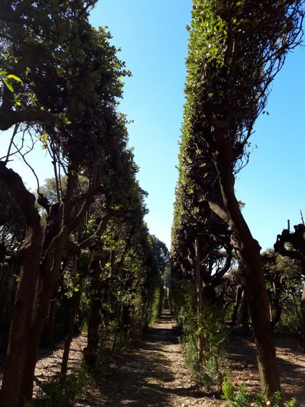 Villa La Quiete, la ragnaia, corridoio interno