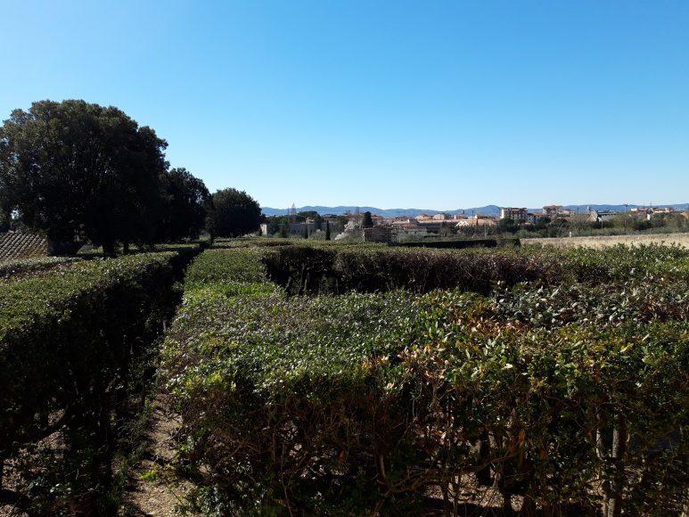 Villa La Quiete, la ragnaia vista dall'alto