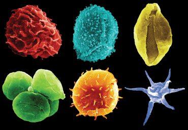 Spore, pollini e plancton
