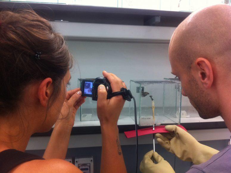 I ricercatori saggiano il riconoscimento dei compagni di nido attraverso biosaggi comportamentali  - foto Rita Cervo