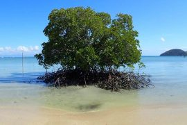 Orpheus Island - Australia