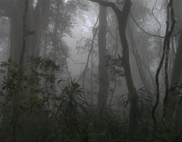 foreste pluviali - Tanzania