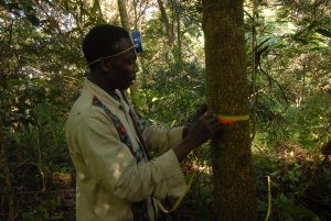 Misurazione degli alberi nei Monti Udzungwa - Tanzania