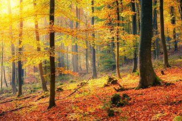 Archivio fotografico 123rf.com - Riproduzione riservata