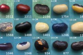 I quindici semi antichi di cui è stato sequenziato il genoma completo
