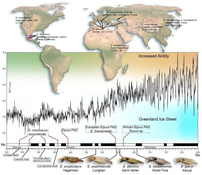 Successione cronologica delle principali specie del genere Equus, in correlazione con i cambiamenti climatici durante il Pleistocene