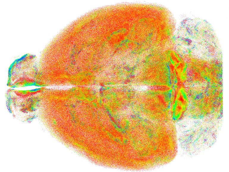 mappatura cervello neuroni clustering